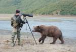 beruang-500x344
